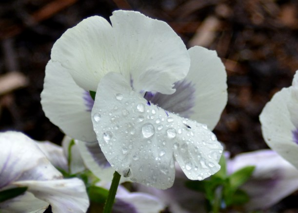 Morning dew Photo by Mike Hartley