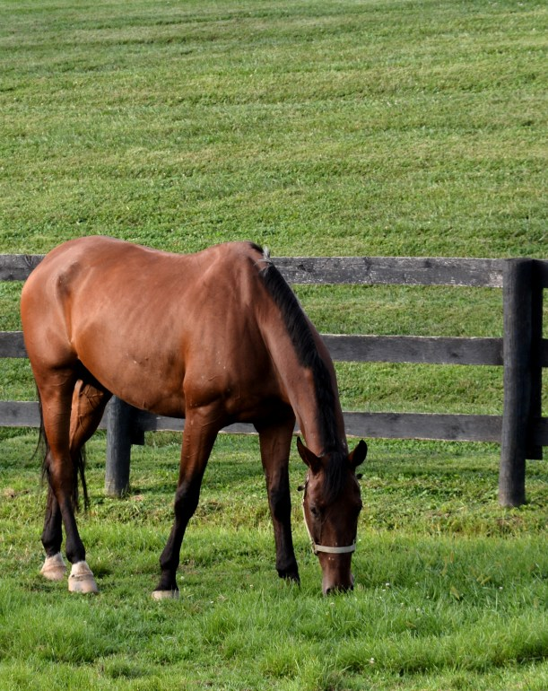 Grazing after a workout.  Photo by Mike Hartley