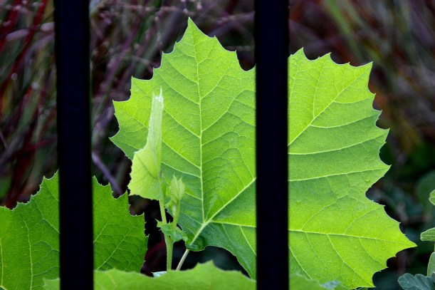 Behind Bars Photo by Mike Hartley