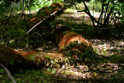 Moss covered logs Photo by Mike Hartley