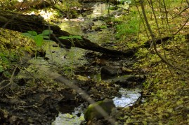 Small stream feeding the Patapsco Photo by Mike Hartley