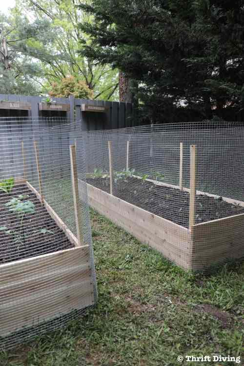 small resolution of how to build a raised garden bed protected with a metal fence how much do
