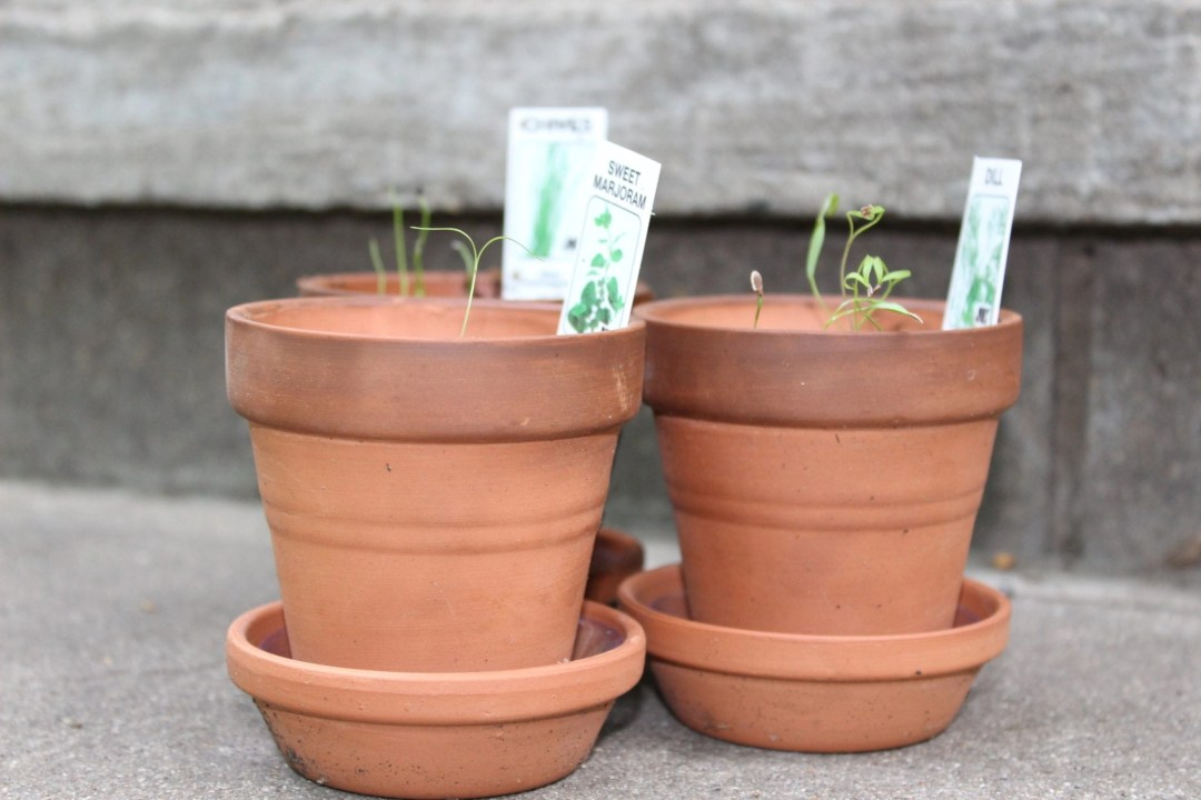 three small red clay pots with seedlings growing