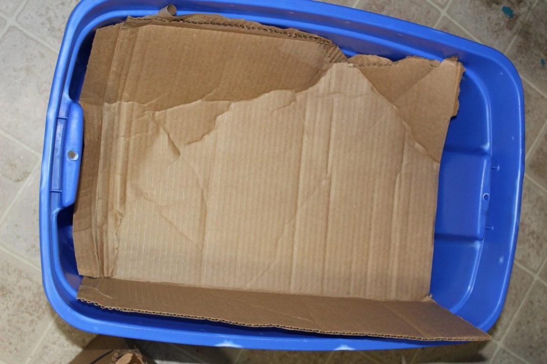 worm farm tote with cardboard