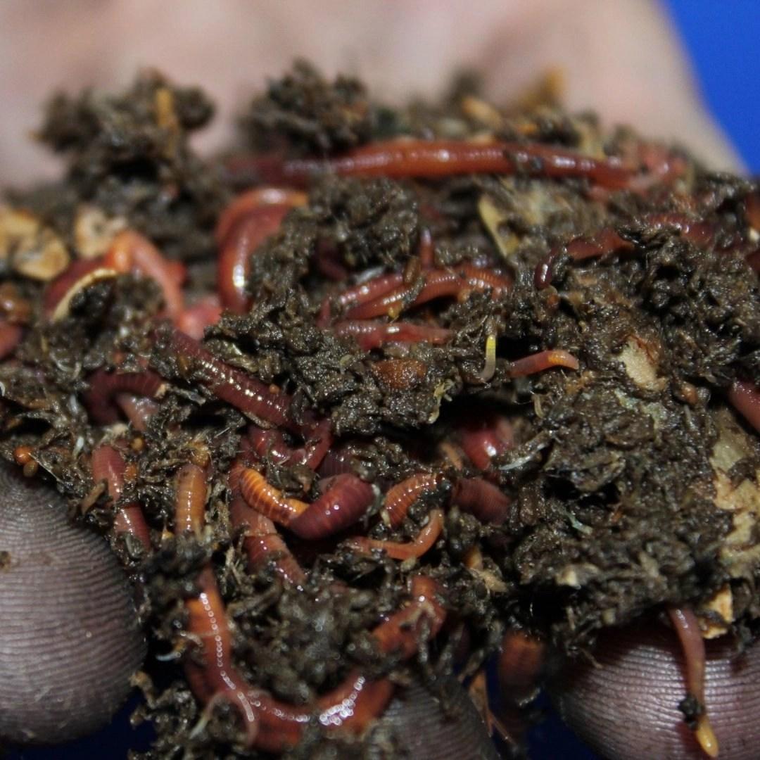 Worm Farming DIY