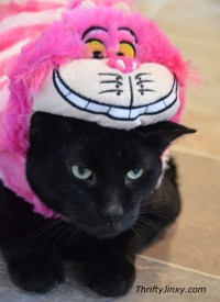 Disney Pet Costumes for Cats and Dogs - Oh, So Cute ...