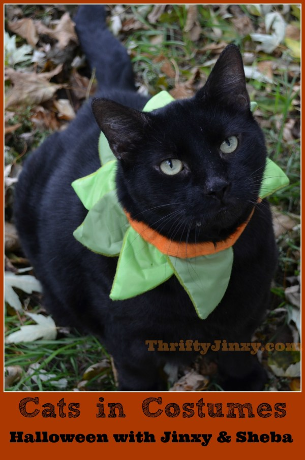 Cats in Costumes Celebrating Halloween with Jinxy and