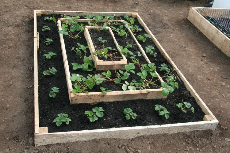 Strawberry Pyramid Raised Bed Beneath It All Is A Layer Of