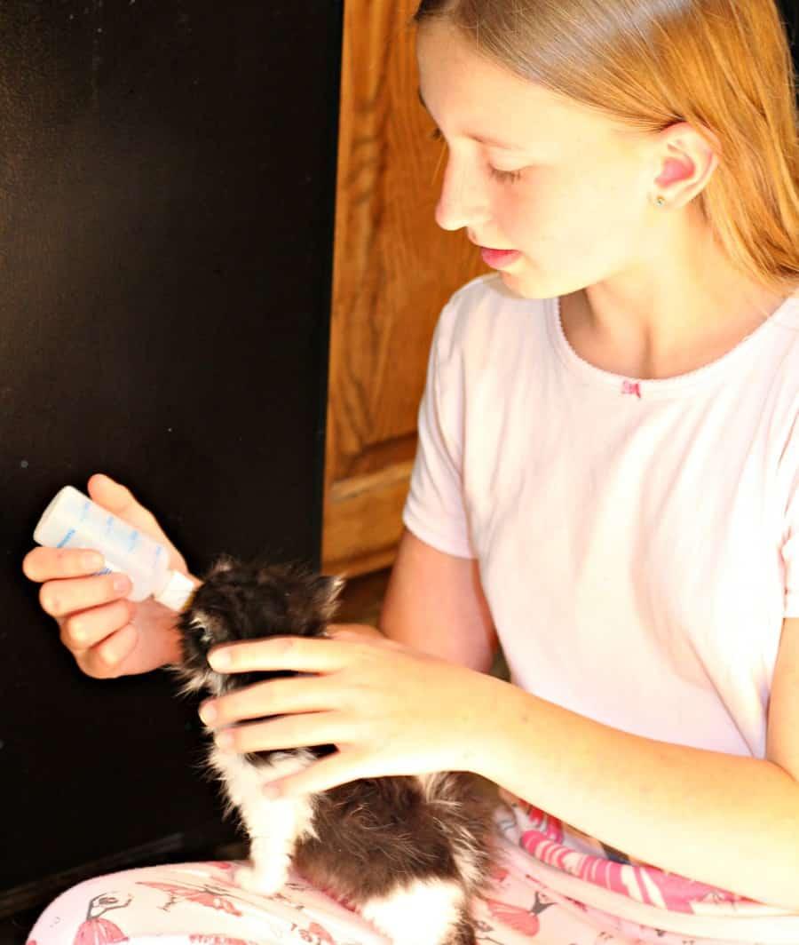PetGiftBox - Cat Subscription Box {+ Discount}