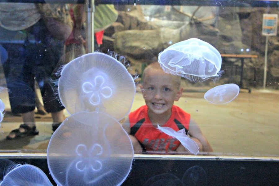 Family Friendly Attractions In Duluth MN - Great Lakes Aquarium