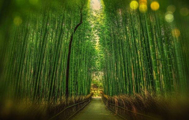 Forêt de bambous, Kyoto