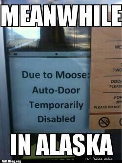 Meanwhile in Alaska