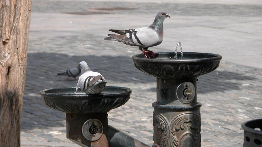 Various Wildlife in Segovia