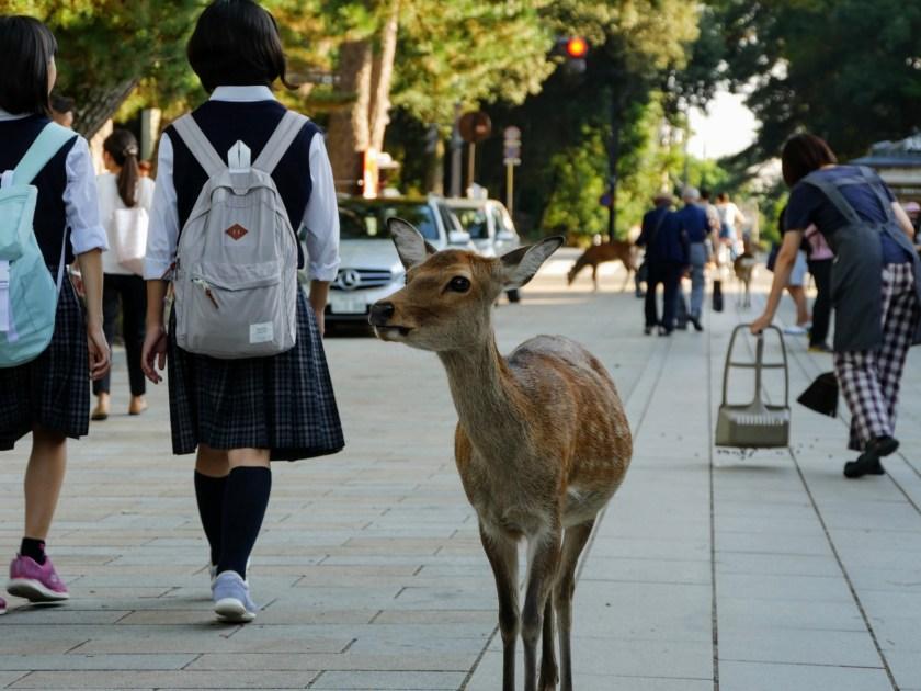 Nara Japan deer