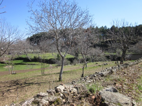 Countryside In Spain