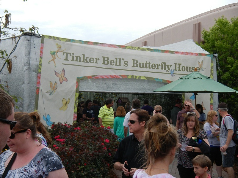The butterfly garden is themed after the fairies this year