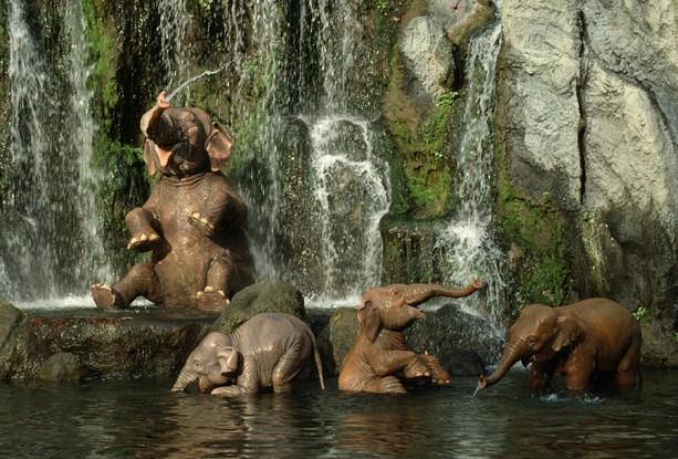 Jungle-Cruise-Elephants-613x415