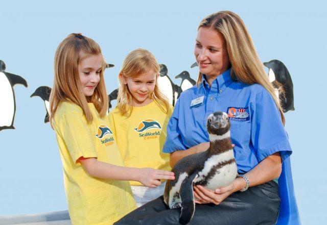 SeaWorld Campers Meet a Magellanic Penguin Hi Res