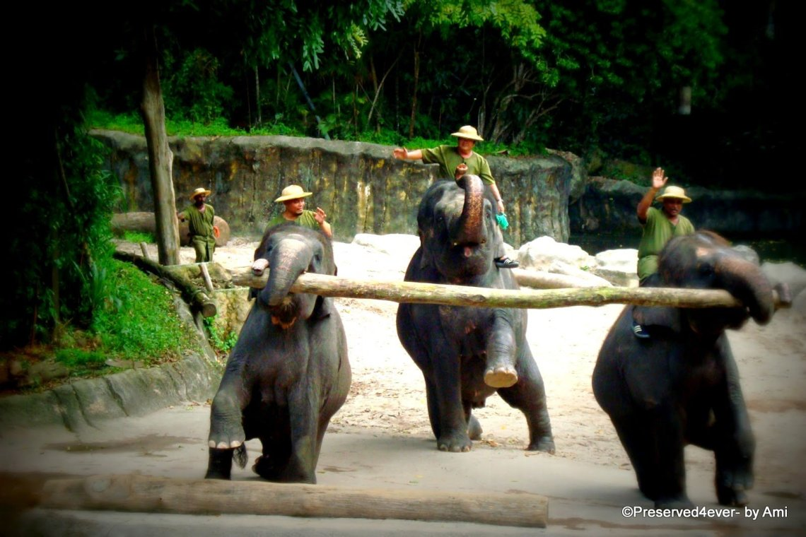 The Elephant show at the Zoo. One of the attractions of Singapore for Kids