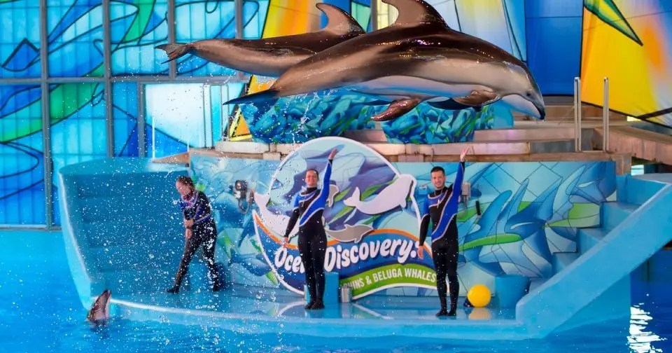 Back to the longer term at Sea World – NewsOK.com