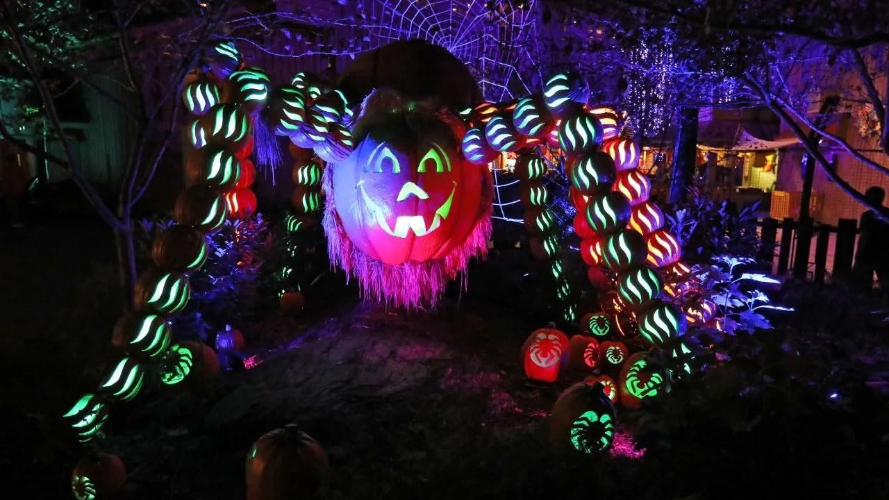 Dollywood adds 1,000-pound pumpkins for harvest celebration