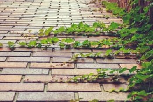 nature-path-plants-grow-rampant