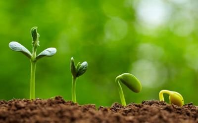 10 Tips for Consistent Personal Growth