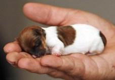 tiny puppy
