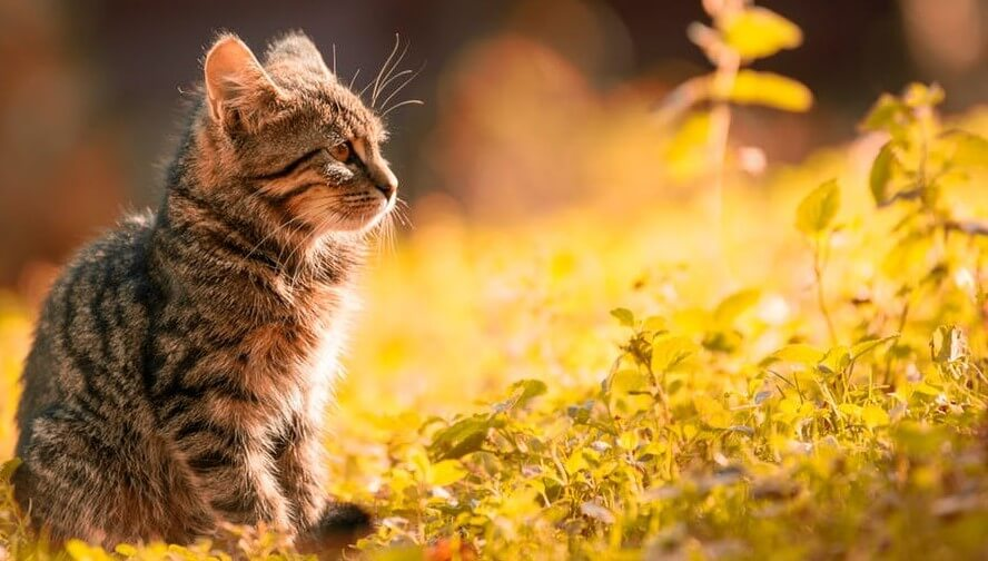 cute cat names thriving