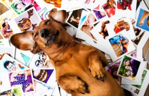 Cute redhair dachshund is among the photos