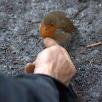 hand and robin square