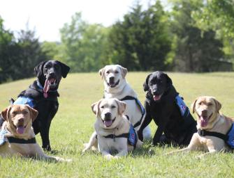 Patriot PAWS: Service Dogs for Disabled Veterans