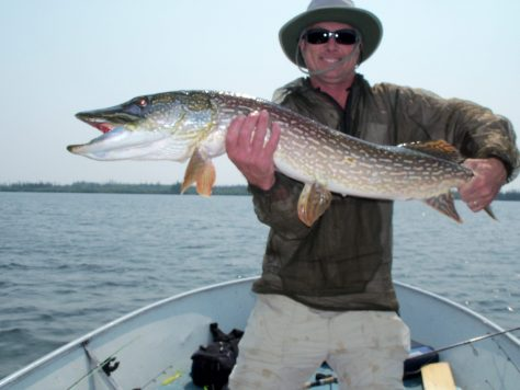 A fisherman poses with a trophy northern pike of over 40 inches taken at Silsby Lake Lodge in Manitoba