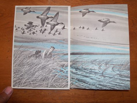 A Close-up of the Artwork on the Endpapers of the Scott Foresman and Holiday House Edition of the Book Stormy By Jim Kjelgaard, with a Flock of Ducks fFying Fast on the Wind.