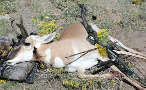 A Photography Of A Buck Pronghorn Antelope Taken with Compound Bow On a Self Guided Bowhunt in Northwestern Colorado. Photograph by Michael Patrick McCarty, Publisher Through a Hunter's Eyes