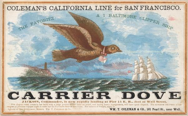 Carrier Dove