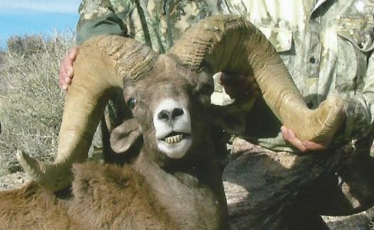 A Trophy Desert Bighorn Ram, taken by Don Waechtler while hunting with Nevada Guide Service and Jim Puryear