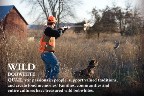 bobwhite quail hunter with hunting dog