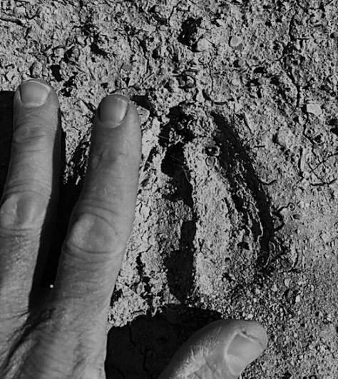 A Mule Deer Track, Probably of A Large Buck, Next To A Human Hand. Found In The Now Hard Mud Of A Remote River Bank in Northern Colorado