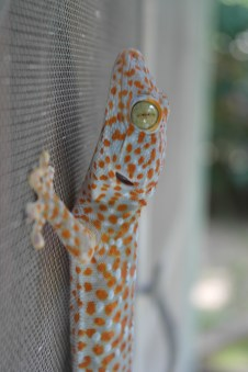 One of my Gecko Friends