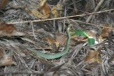 Scary green snake!