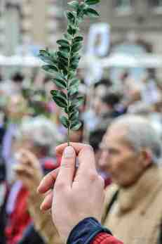 """French (boxwood) """"palm"""" being held up for a blessing"""