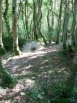 'Bluebell Stalks' Bucks Valley Woods