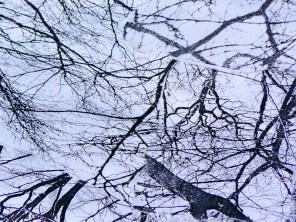 root-branch-WP_lindagordon_170310_2-2