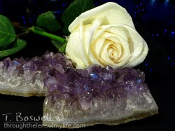 amethyst and white rose
