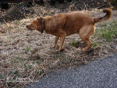DSC07899-2cp-dog-shaking-off-dry-grass-wm
