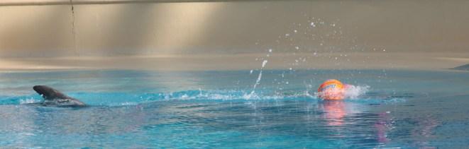 Siegfried and Roy's Secret Garden and Dolphin Habitat, Mirage Hotel