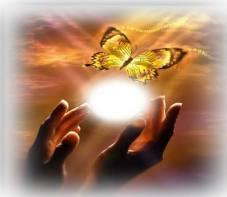 Butterfly_release