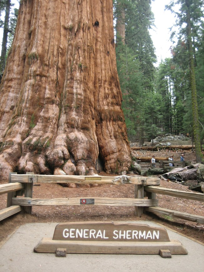 Close to the General Sherman Tree. It was difficult to get a shot of the tree without tourists standing in front of it. There was a nearly constant parade of people standing behind the sign so someone they were with could take a photo of them with the tree. I was alone and didn't want to ask a stranger to take a photo of me standing there, so I have no photo of me standing in front of the tree. You'll just have to believe I was really there since I have no photographic evidence.