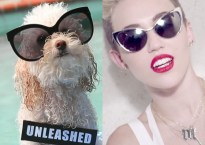 A dog and Miley Cyrus